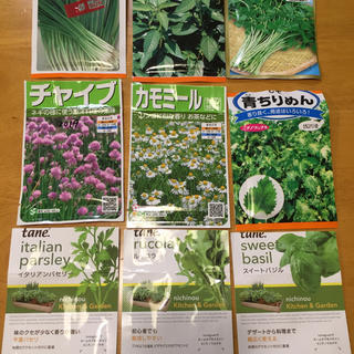 野菜の種 ハーブの種 6種類 家庭菜園 ガーデニング(野菜)