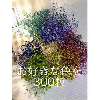 ドライフラワーかすみ草 ❣️枝無し ヘッド 300粒(ドライフラワー)