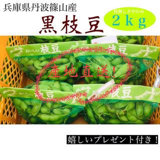 丹波篠山産黒枝豆!(野菜)