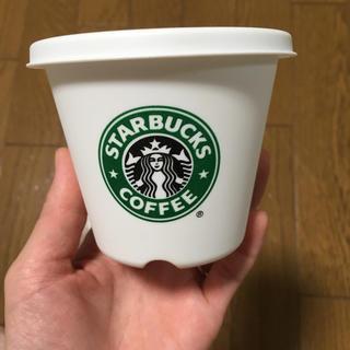 スターバックスコーヒー(Starbucks Coffee)のスターバックス 鉢(その他)