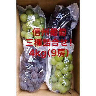信州葡萄詰合せ 巨峰 黄甘 ピオーネ 種無し 4kg(9房) ブドウ ぶどうわ(フルーツ)