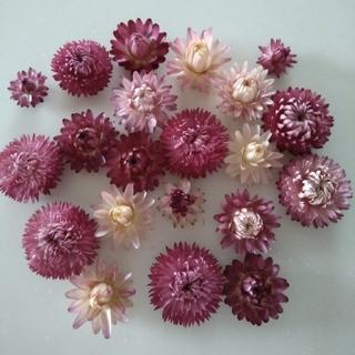 ドライフラワー 花材 カイザイク 21個(ドライフラワー)