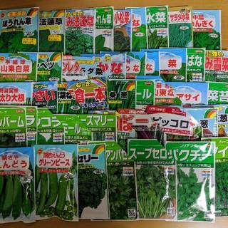 【野菜・花の種】90種類から6種類を選んで300円!! 家庭菜園に(野菜)