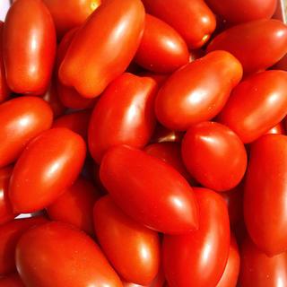 ミニトマトあいこ 1キロ(野菜)