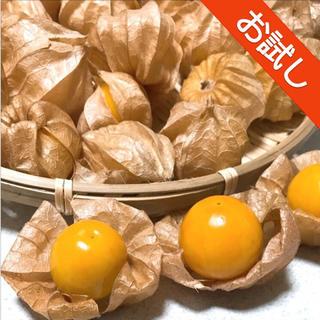 ☆9〜10月限定☆ オレンジチェリー/フルーツほおずき 15粒 青森県産(野菜)