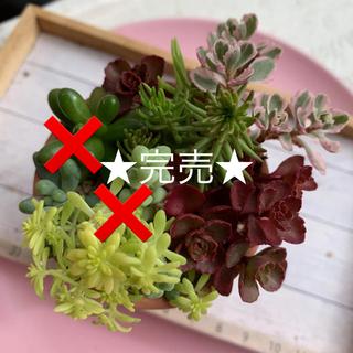 多肉植物★完売。また春に(^^)(その他)