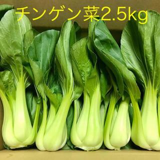 新鮮チンゲン菜2.5kg(野菜)