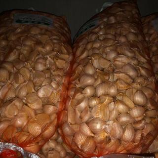 青森県産 福地ホワイト大きめにんにく種用食用に 5キロ送料無料(野菜)