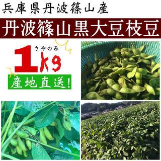 兵庫県丹波篠山産 黒大豆枝豆 さや1キロ(野菜)