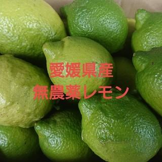 無農薬レモン(3㎏)(フルーツ)