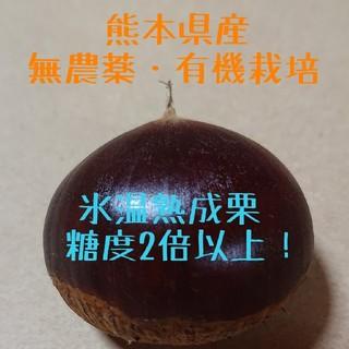 【即購入OK】氷温熟成 栗 4kg★無農薬・有機栽培☆(フルーツ)