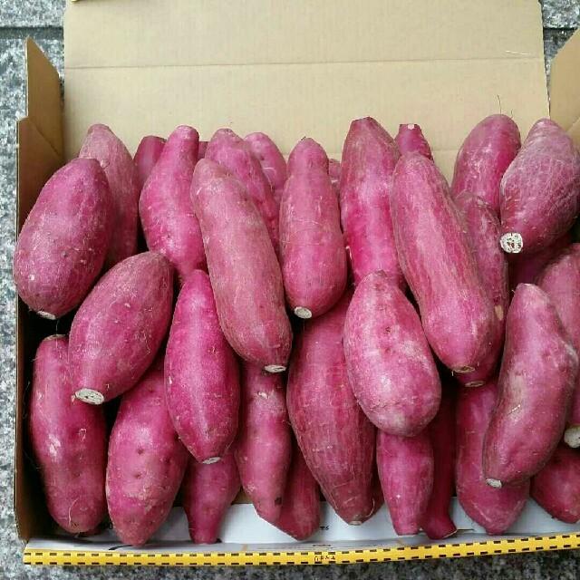 宮崎紅さつまいも少し小さめ約30~35本(2kg)丸、長、混合 食品/飲料/酒の食品(野菜)の商品写真