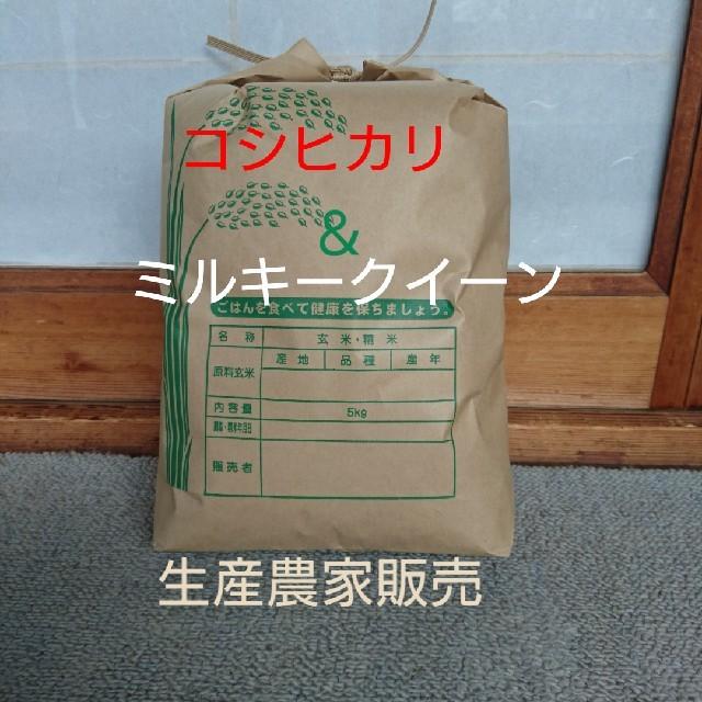 新米です❕白米5㎏ 食品/飲料/酒の食品(米/穀物)の商品写真