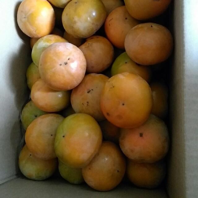 大人気!とれたて柿、40個 食品/飲料/酒の食品(フルーツ)の商品写真