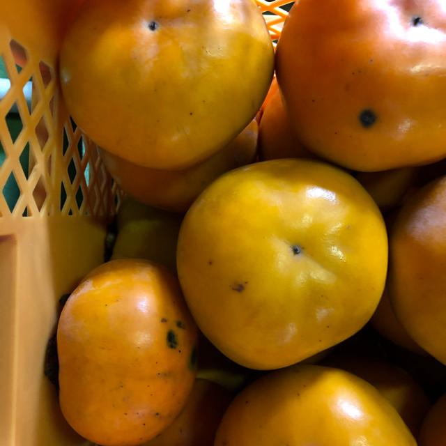 福岡県朝倉市産訳あり柿5kg 食品/飲料/酒の食品(フルーツ)の商品写真