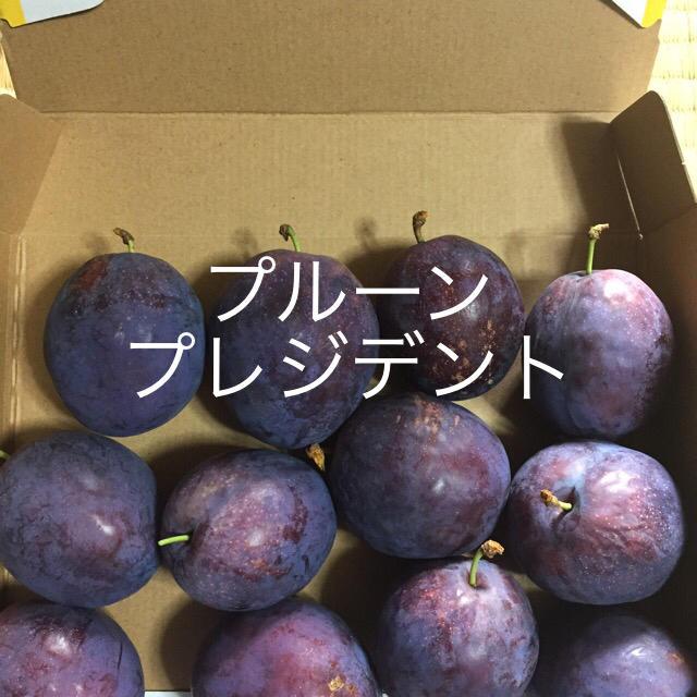生のプルーン約2.5キロ 訳あり、家庭用 食品/飲料/酒の食品(フルーツ)の商品写真