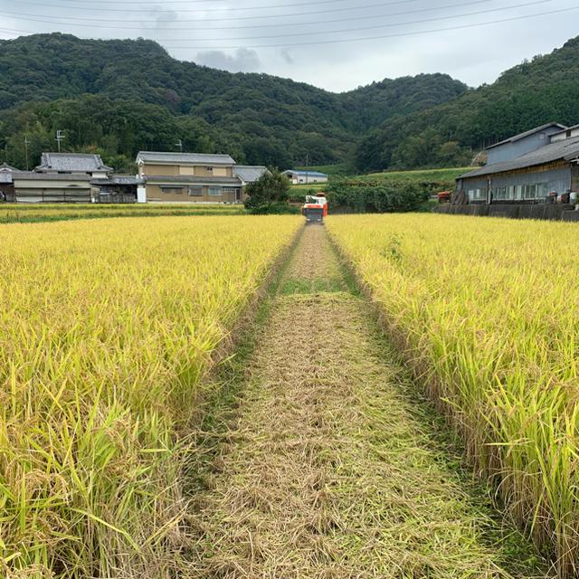 令和元年 兵庫県産 きぬむすめ  食品/飲料/酒の食品(米/穀物)の商品写真