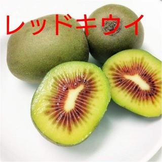 キウイフルーツ【レッドキウイ】S~Mサイズ 1キロ(フルーツ)
