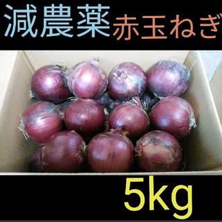 北海道産 減農薬 赤玉ねぎ 5キロ(野菜)