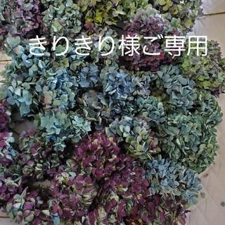きりきり様ご専用♡秋色紫陽花ドライフラワー(ドライフラワー)