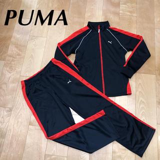PUMA - ★超 美品 PUMA プーマ レディース M ジャージ 上下 長袖 160 にも