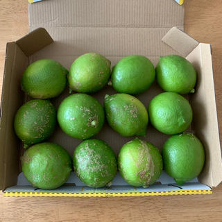 無農薬 グリーンレモン 12個 約1〜1.2kg(フルーツ)