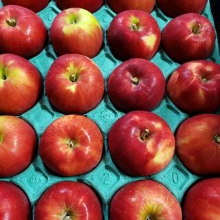 パティシエが好む品種「紅玉」✨葉とらず栽培ミニサイズ5kg(フルーツ)