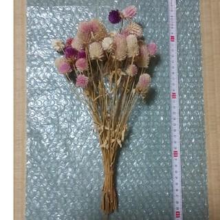 千日紅 ドライフラワー 色サイズミックス 茎長めセンニチコウ(ドライフラワー)