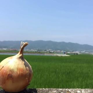 訳あり玉ねぎ 5キロ (野菜)