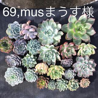 69,musまうす様専用 多肉植物(その他)