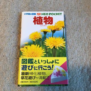 小学館 - 小学館の図鑑 NEO POCKET -ネオぽけっとー 植物