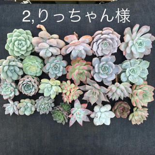 2.りっちゃん様専用  多肉植物(プランター)