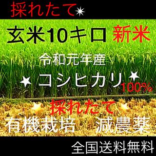 ✳令和元年新米コシヒカリ【岐阜県産】✳玄米10キロ