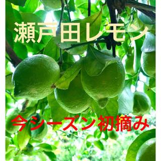【はらぺこあおむし⭐︎様】瀬戸田レモン 特別栽培グリーンレモン(フルーツ)