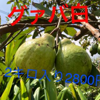 徳之島産無農薬グァバ白2キロ2800円(フルーツ)