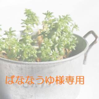 ばななうゆ様専用(その他)