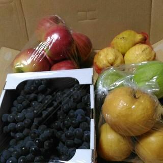 ご家庭用 果物詰め合わせ 果物セット 約八キログラム