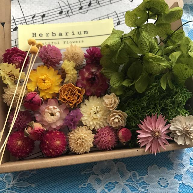 ドライフラワープリザーブドフラワー花材セットA ハンドメイドのフラワー/ガーデン(ドライフラワー)の商品写真