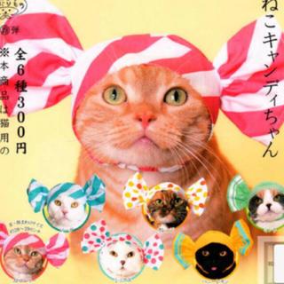 サンリオ - 【新品】猫かぶりもの❤︎キャンディー❤︎