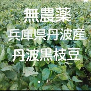 丹波の黒豆枝豆 無農薬 丹波産(野菜)