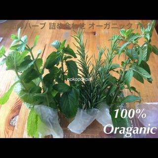 季節のハーブ 5種セット 完全無農薬無化学肥料有機栽培(野菜)