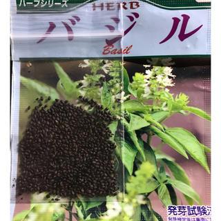 オリジナル(Original)のバジル バジルの種 約200粒 送料込み(野菜)