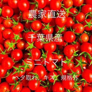 ミニトマト 1キロ