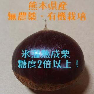 【即購入OK】氷温熟成 栗 1.5kg ★無農薬・有機栽培☆(フルーツ)