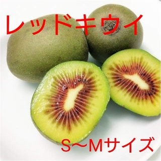 S~Mサイズ キウイフルーツ【レッドキウイ】1キロ(フルーツ)