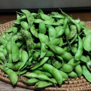 丹波産  本黒  黒枝豆  1キロ