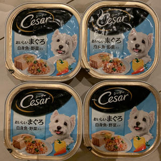 CASAR - シーザー 美味しいマグロ 白身魚野菜入り