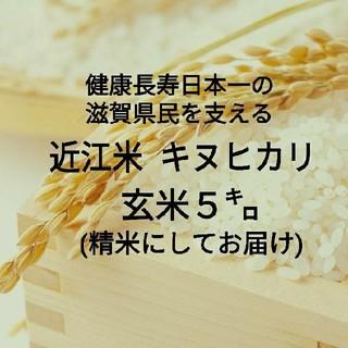 残りわずか!熟練農家直送☆近江米キヌヒカリ5kg☆令和元年産