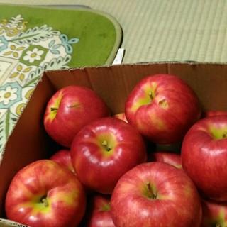 規格外 ジョナゴールド りんご 4.2kg(フルーツ)