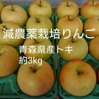 減農薬栽培りんご 青森県産トキ約3kg(フルーツ)